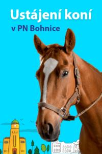 Ustájení koní v PN Bohnice